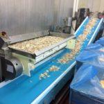 Potato conveyor