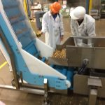 Snack mix on a DynaClean vertical incline conveyor