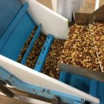 A DynaClean food grade conveyor processing trail mix