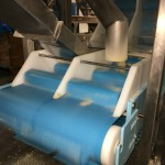 DynaClean conveyor processing almonds