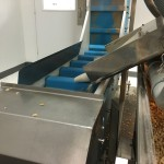 Almonds feeding down a chute onto a vertical conveyor