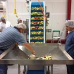 DynaClean food conveyor being used for vegetables.