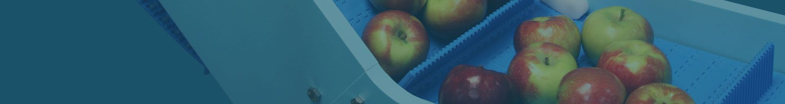 DynaClean foood conveyor with apples.