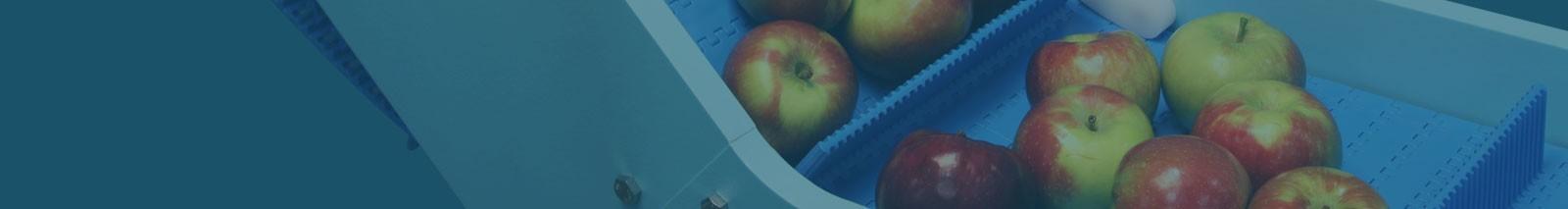 DynaClean foood conveyor with apples.